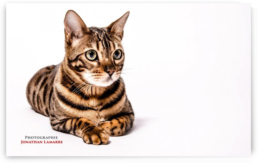 Cat life by Johnnyphotofreak