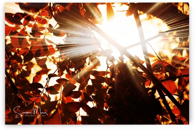 Sun rays by Simon Maxx Gallery