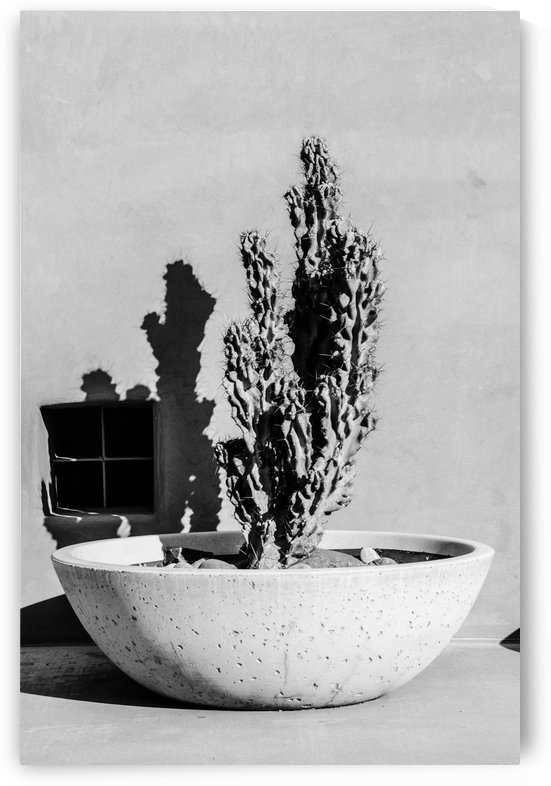 Cactus in a Concrete Bowl by David Pinter