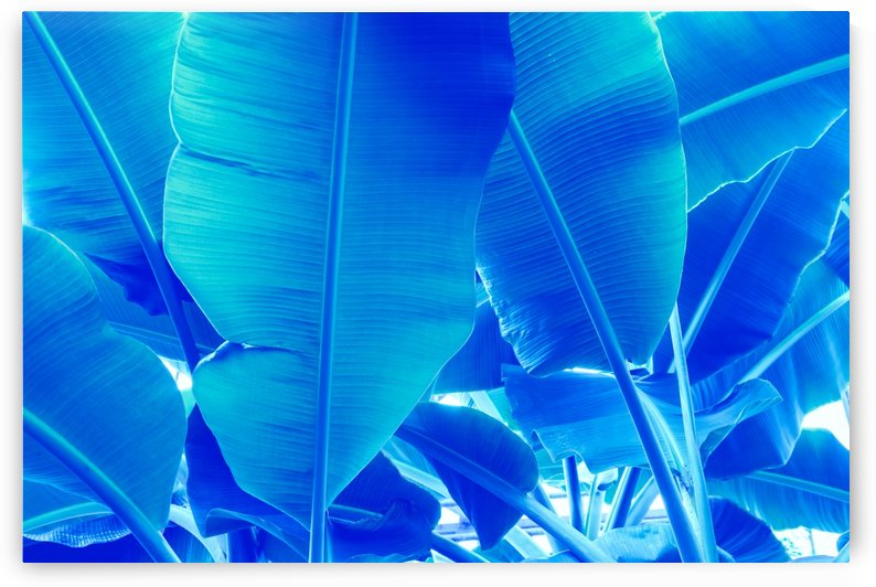 Blue Bananas - Re-Imagined Tropical Biophilia by GeorgiaM