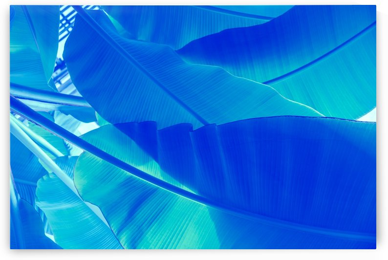 Blue Banana - Reimagined Tropical Biophilia by GeorgiaM