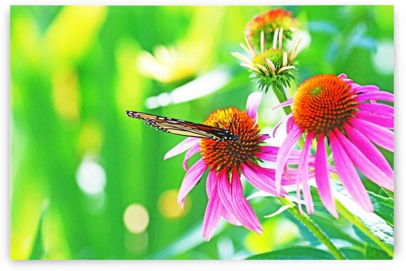 Monarch In The Neon Garden by Deb Oppermann