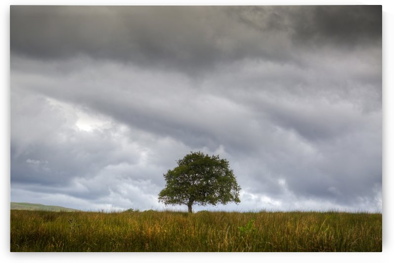 A tree and an approaching storm by Leighton Collins