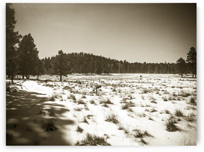 Rural Grass and Snow by David Pinter