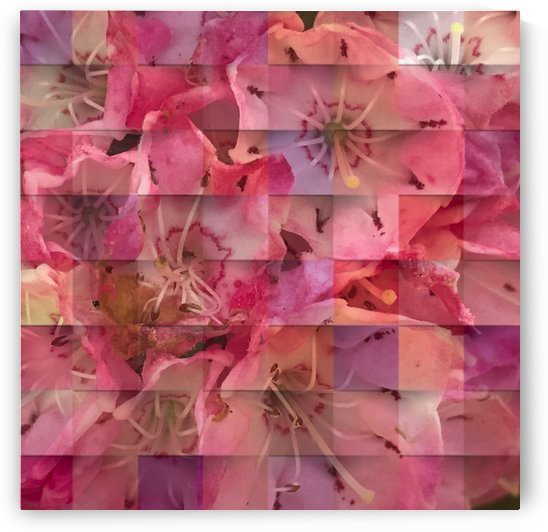 Hydrangea Blossom 200724 by BotanicalArt ca