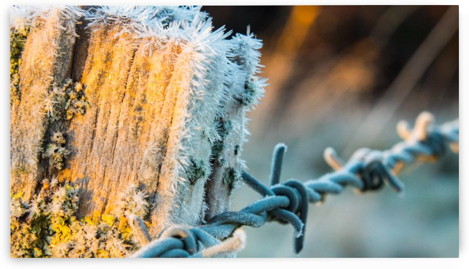 Frosty Fence by Nick Goll