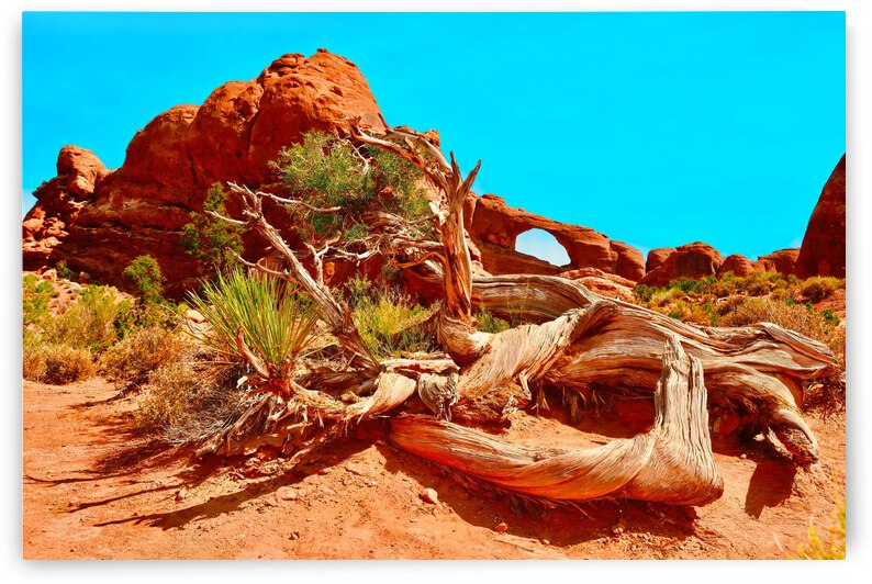Petrified Tree ... Arches National Park Utah by Fred J Bivetto
