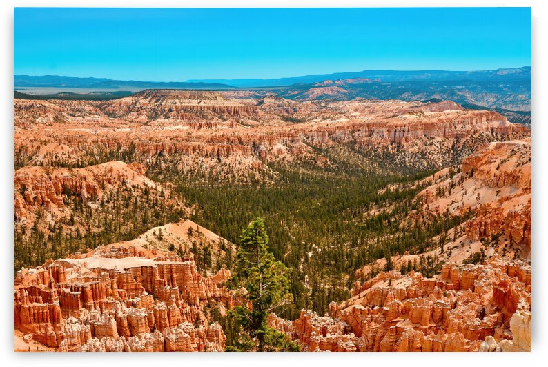 Paunsaugunt Plateau ... Bryce Canyon National Park Utah by Fred J Bivetto