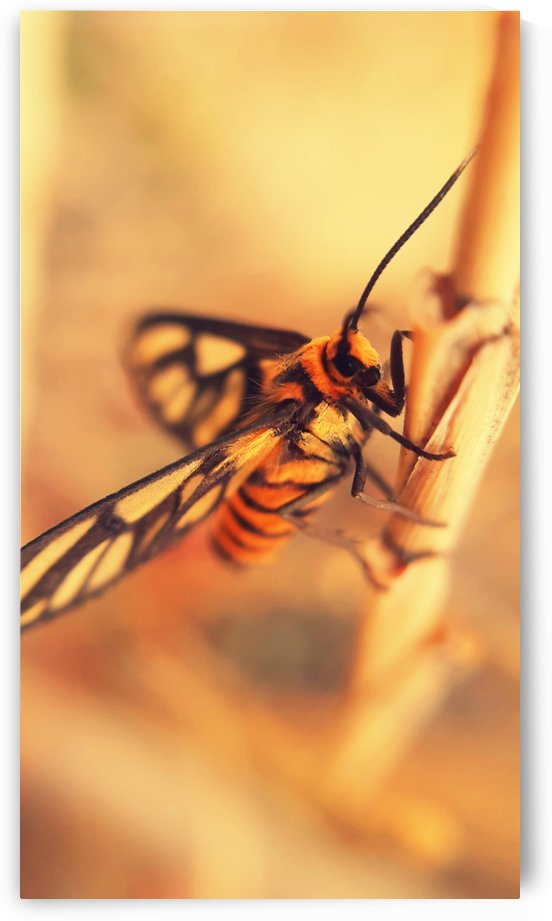 Unidentified insect by jgarcia