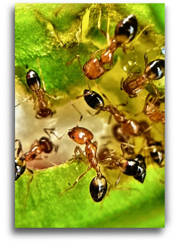 Hungry ants by jgarcia
