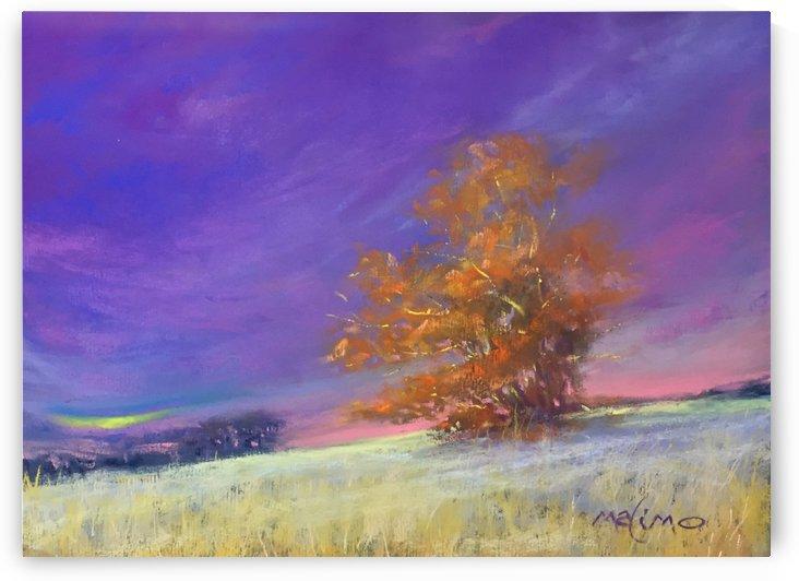 frosty oak by MALIMO