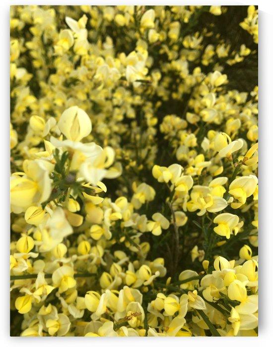 Primavera Yellow by Miels El Nucleus