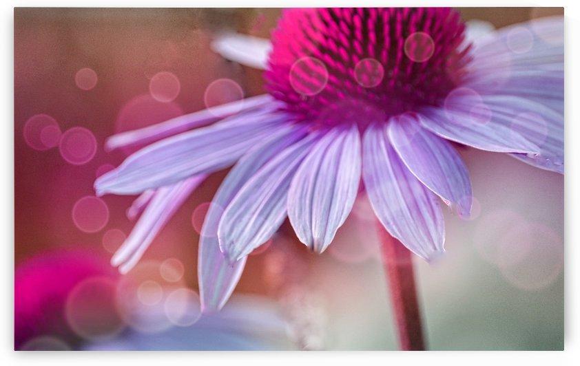 Coneflower Purple by Joan Han