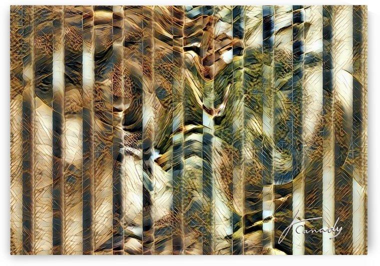 786D154E 6F07 4CD2 A3A3 73A3EE1366C1 by JLBCArtGALLERY