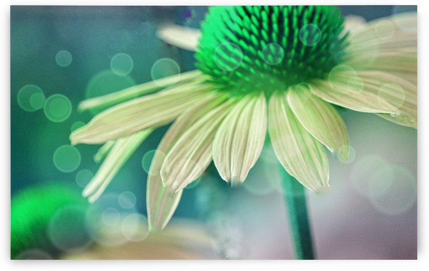Coneflower Green by Joan Han