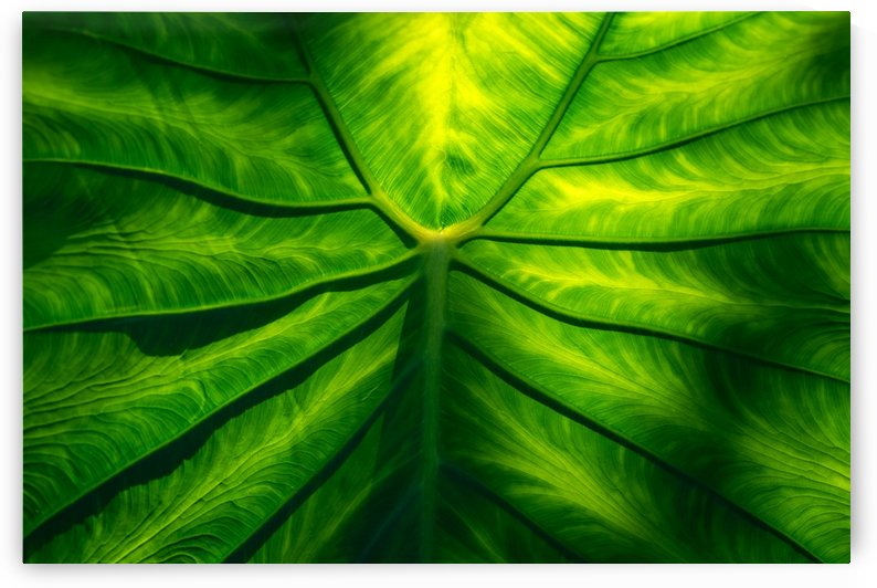 Hidden Beauty - Underneath an Intricate Giant Tropical Leaf by GeorgiaM