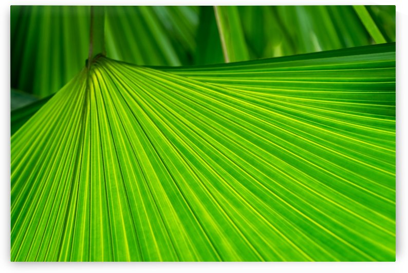 Green Tropical Biophilia - Fan Leaved Palm Tree - Alternate Variant by GeorgiaM
