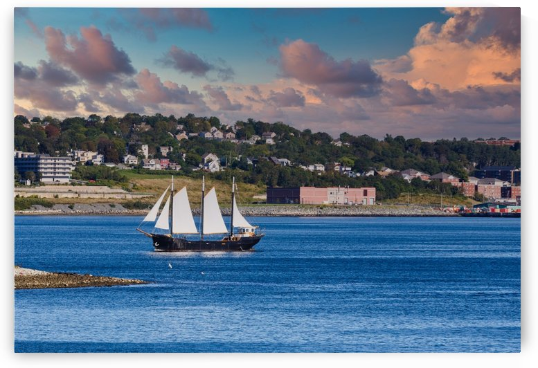 Black Sailboat with White Sails in Halifax by Darryl Brooks