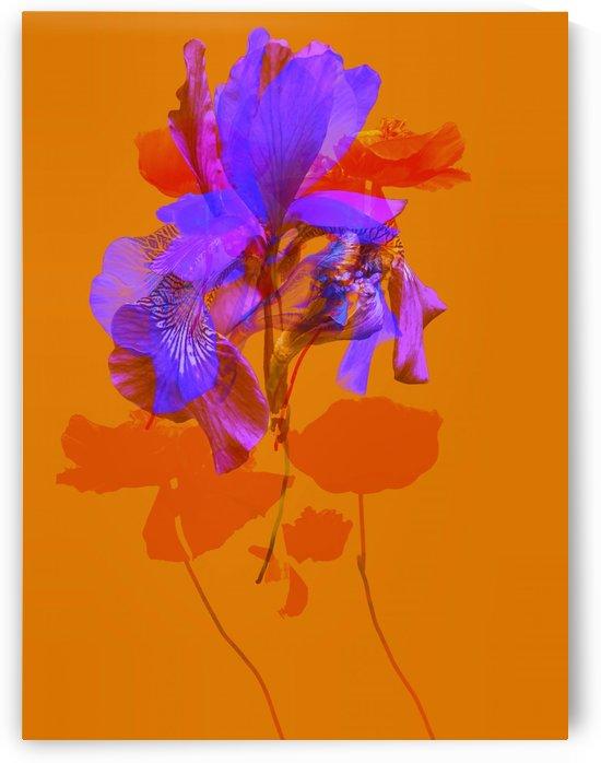 Red Flower  by Marc VanDermeer