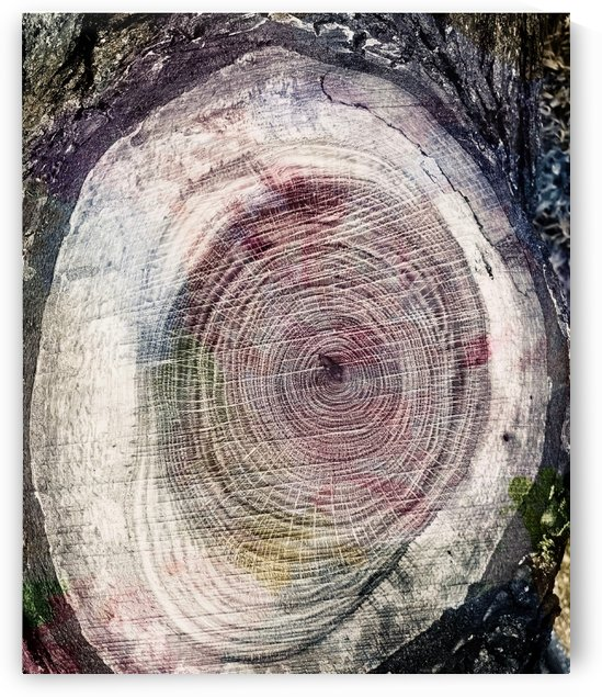 Tree Ring No.2 by Sarah Butcher