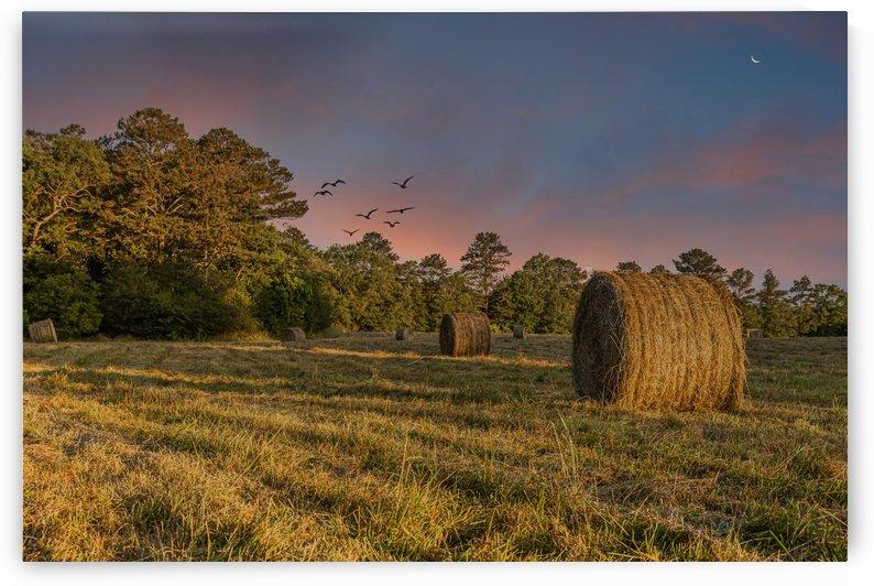 Rolls of Hay in Dusk Light by Darryl Brooks