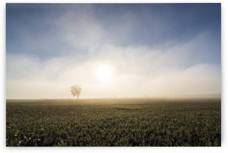 Lone Tree by Mark Vanderpol