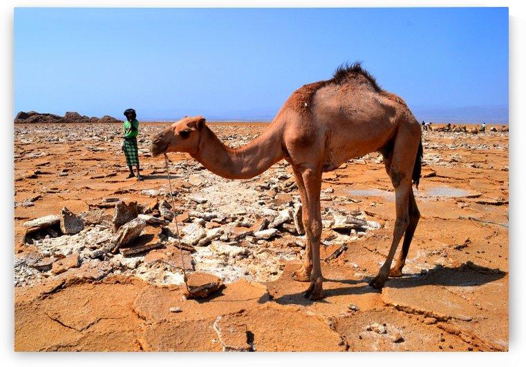 Man with the camel by Elena Ska