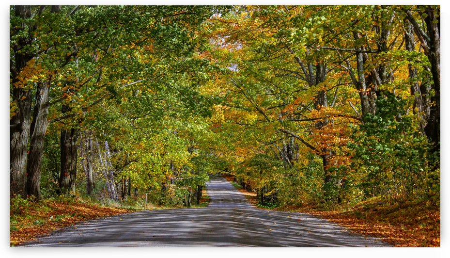Fall Colors over a Country Road by Nicholas