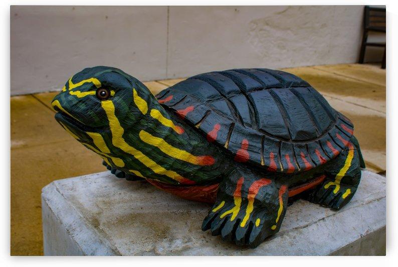 Wooden Turtle by Phoenix Wilbur