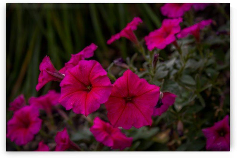 Flowers In A Garden by Phoenix Wilbur