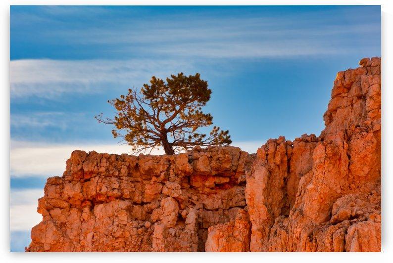 *Rock Tree by Diane Lynn
