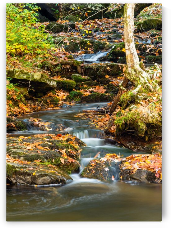 Flowing Through Fall by Diane Lynn