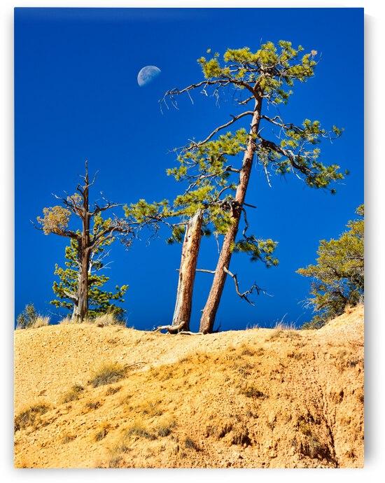 Early Evening Blue Sky in Southern Utah by Diane Lynn