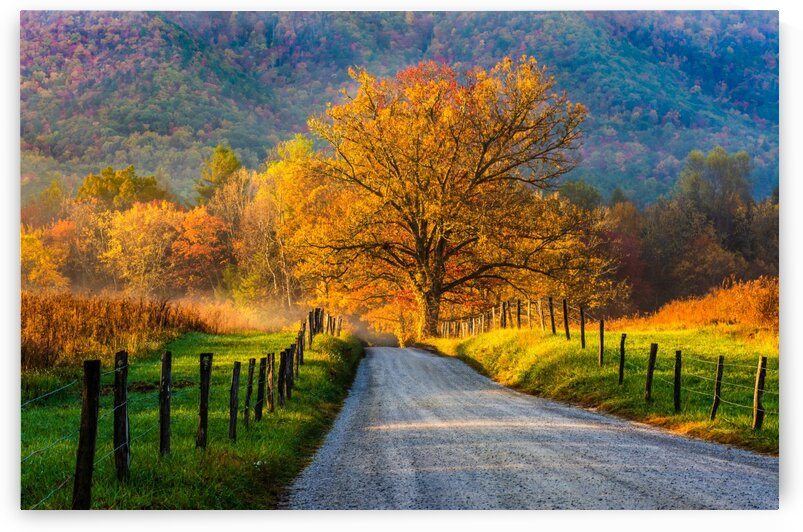 *EDIT*Autumn Light on Sparks Lane  by Diane Lynn