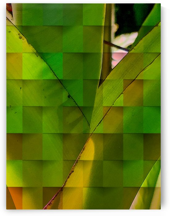 Banana Leaf Composition by BotanicalArt ca