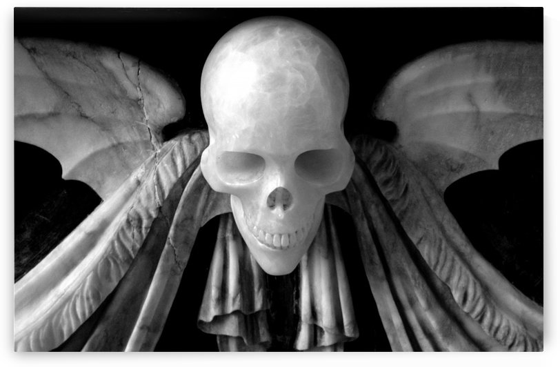 Skull With Wings by James Hilsdon