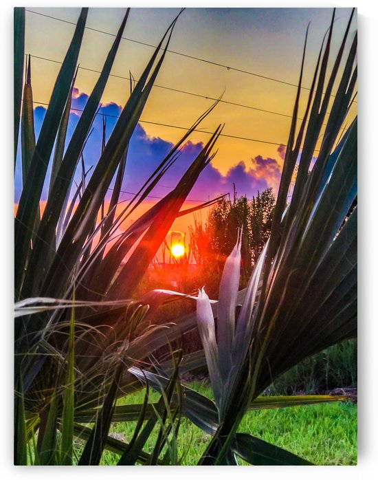 Sargent Sunset Palm 0820 by Shay Morrow