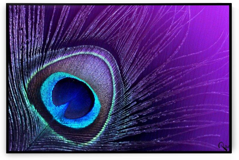 Purple Peacock Feather by Punyatoya