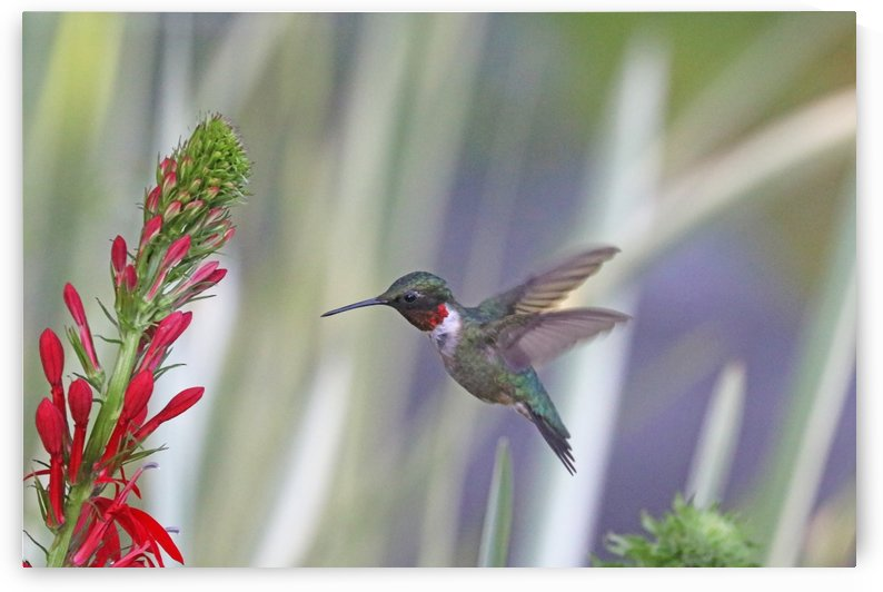 Glittering Hummingbird by Deb Oppermann
