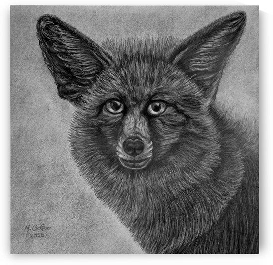 Breckinridge Fox by Morteza Golpoor