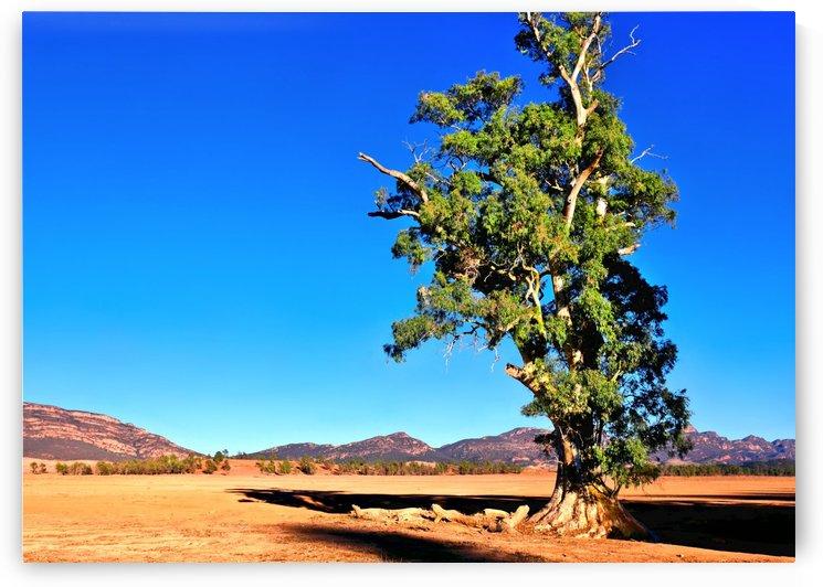 Alone - Cazneauxs Tree by Lexa Harpell