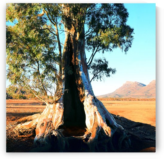 Endurance - Cazneaux Tree by Lexa Harpell