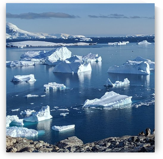 Antarctica icebergs  by Cameratic