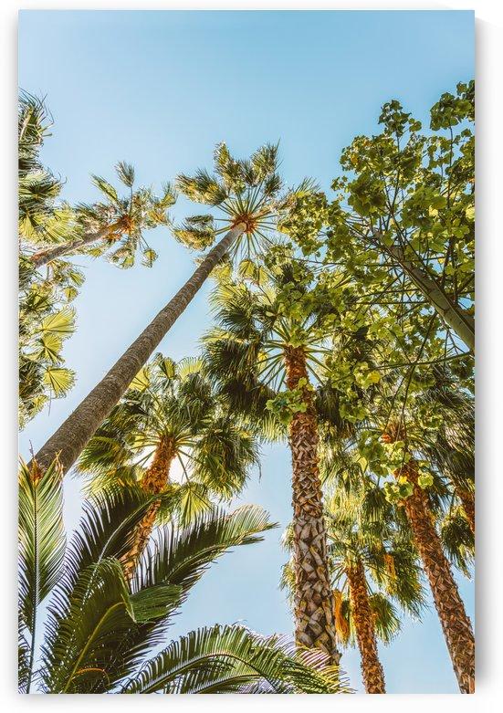 Palm Trees Summer Beach Vibes Travel Print Palm Tree Coconut Leaves Green Leaf Blue Teal Sky by Radu Bercan