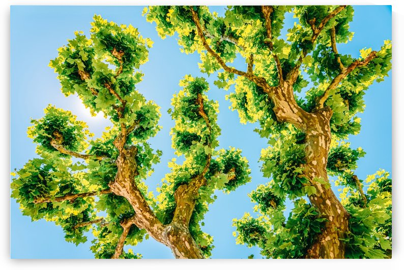 Exotic Tree Vegetation Green Blue Turquoise Teal Colors Exotic Trees Green Leaves Leafy Green by Radu Bercan