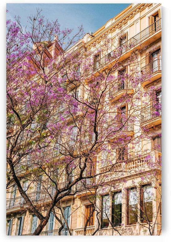 Purple Flowers Trees Barcelona City Print Spring In Barcelona Spanish Spring Season Urban Pink by Radu Bercan