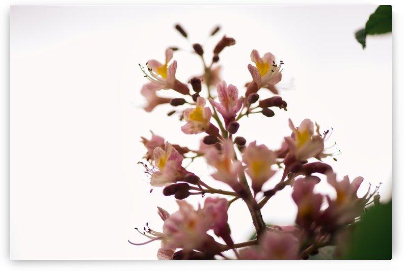 Wild Flowers 2 by CarlosDoesPhoto