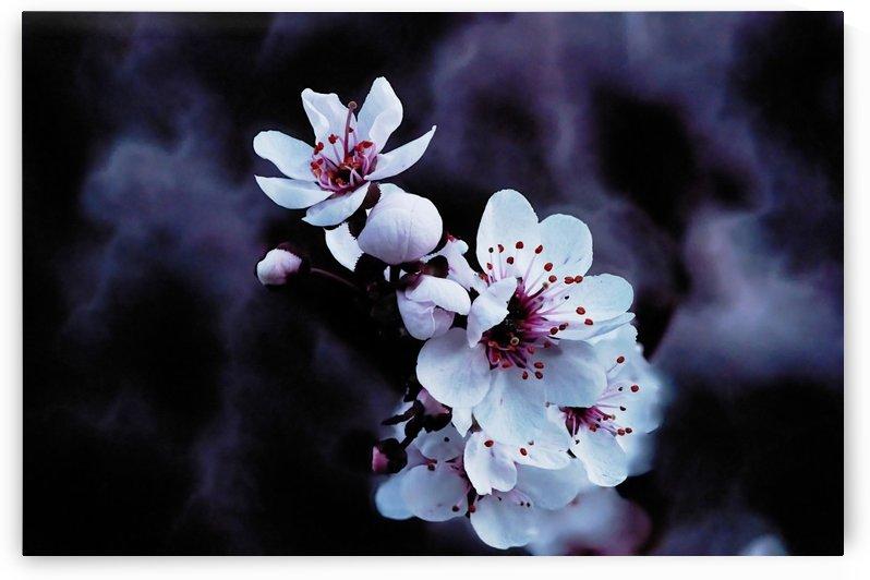 Night Flowers by CarlosDoesPhoto