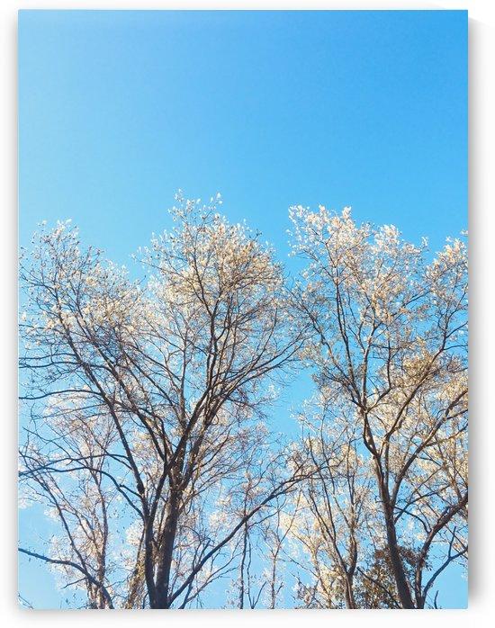 Treetops by Amna Hashmi