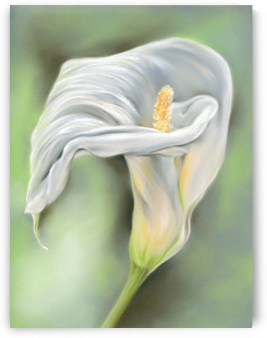 Graceful Lily Flower White Calla by MM Anderson